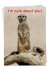 Hilarious Valentine's Day Card From NobleWorksInc.com - Nuts Over You