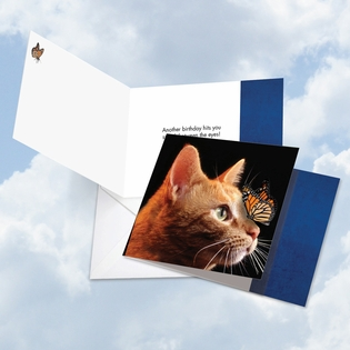 Artful Birthday Square-Top Card From NobleWorksInc.com - On The Nose Tabby Cat