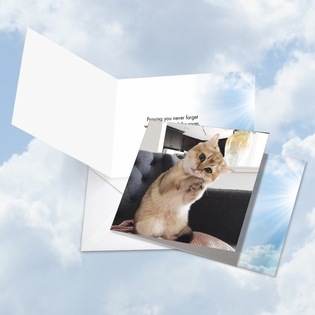 Hysterical All Occasions Square-Top Card From NobleWorksInc.com - Paws and Prayers Forget