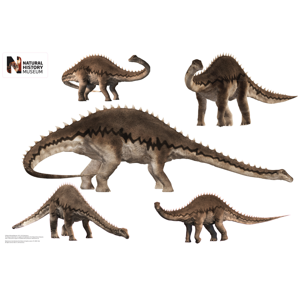 Diplodocus Layout Wall Decor
