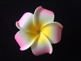 "2.5"" Inch Plumeria Flower Hair Clip - Set of 12"