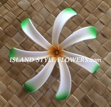 "4"" TAHITIAN GARDENIA TIARE  FLOWER -White w/ Green Tips"