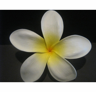 Island style flowers hawaiian petals tropical plumeria clips 5 star pointed petal plumeria flower hair pick white w yellow center mightylinksfo