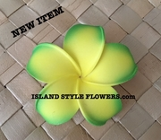 POINTED PETAL PLUMERIA- Yellow w/ Mango Green Tips