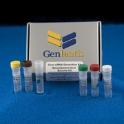 Dicer Enzyme Kits
