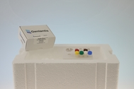 Recombinant Turbo Dicer Enzyme Kit