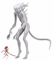 """Neomorph  (Alien: Covenant) 7"""" Scale Action Figure by NECA"""