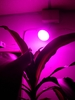 1,000 lumens Plant Growth Luminary