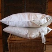 Organic Cotton Pillow Encasement - Dust-Mite Proof