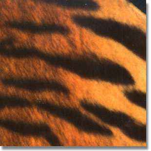 Tiger Print Fabric cut by the yard