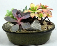 BONSAI SUCCULENT GARDEN - EASY TO GROW - CERAMIC POT