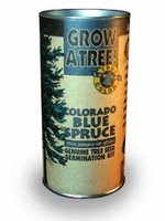 Colorado Blue Spruce Tree Growing Kit