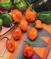 Habanero Pepper - 100 Seeds