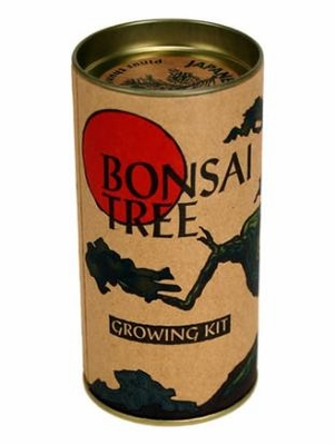 Japanese Black Pine Bonsai Tree Kit