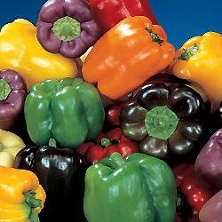 Organic Rainbow Bell Pepper 40 Seeds