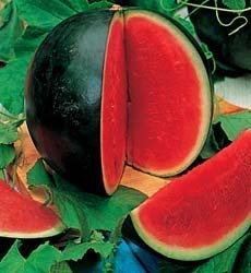 Sugar Baby Watermelon 100 Seeds