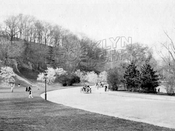 Magnolia trees in bloom in Prospect Park, c.1920