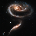 A Rose Made Of Galaxies - 4 Options Available