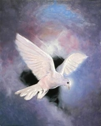 The Holy Spirit by Stephen S. Sawyer - 12 Options Available