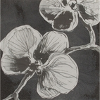 Black Orchid Luncheon Napkin