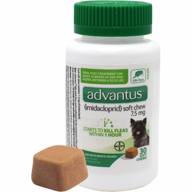 Is Advantus Safe For Small Dogs