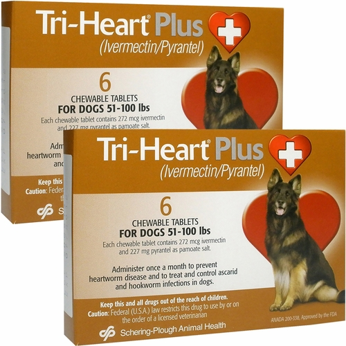 Drug interactions albuterol dogs