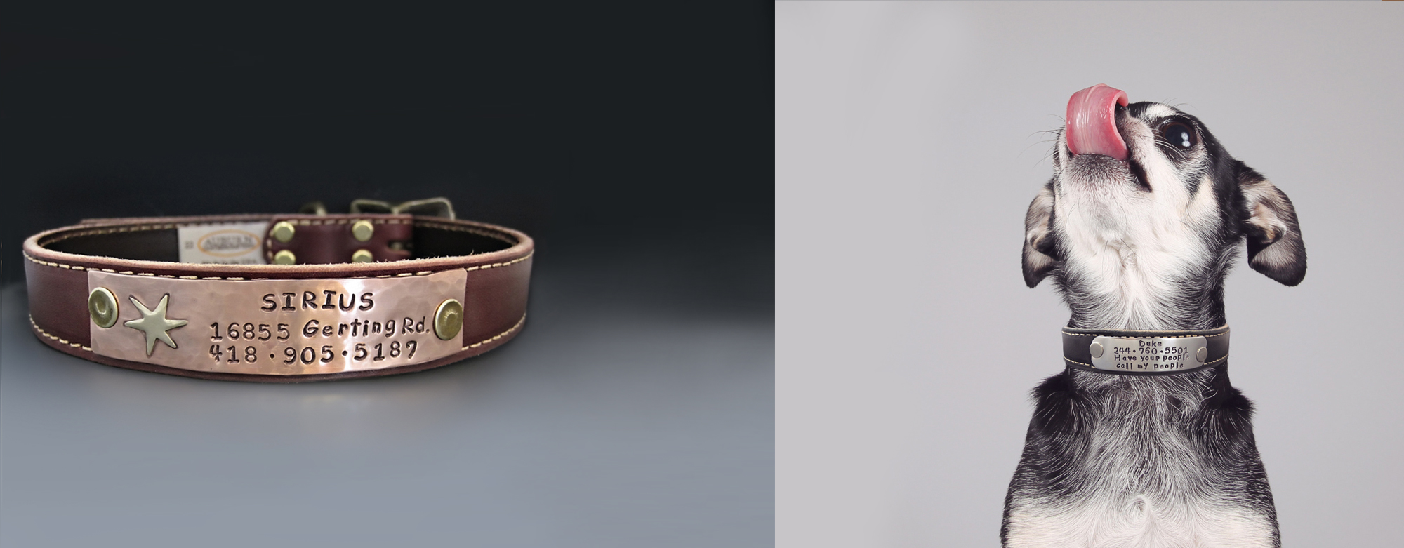 String of Jewels Custom Leather Dog Collars Banner