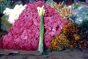 Tenancingo Flower Market