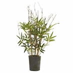 "27"" Silk Bamboo Tree with Cement Pot"
