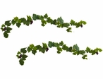 6' Grape Leaf Deluxe Garland with Grapes, Set of 2
