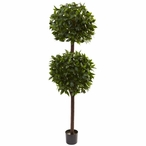 6' Silk Sweet Bay Double Ball Topiary