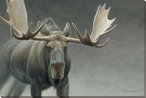 A Lot of Bull Moose Wrapped Canvas Giclee Print Wall Art