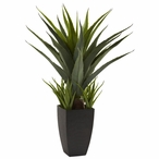 Agave Silk Plant with Black Planter