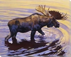 Alaskan Gold Moose in the Water Wrapped Canvas Giclee Print
