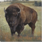 American Bison Wrapped Canvas Giclee Print Wall Art