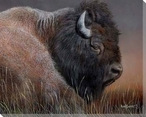 American Icon Bison Wrapped Canvas Giclee Print Wall Art