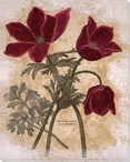 Anemone Varie Flore Simplici Flowers Wrapped Canvas Giclee Print