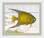Angel Fish Matted and Framed Art Print Wall Art