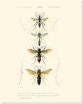 Antique Bees II Wrapped Canvas Giclee Print Wall Art