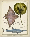 Antique Rays & Fish II Wrapped Canvas Giclee Print Wall Art