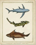 Antique Rays & Fish III Wrapped Canvas Giclee Print Wall Art