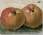 Apples No. 361 Wrapped Canvas Giclee Print Wall Art