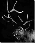 Attitude Deer Wrapped Canvas Giclee Print Wall Art