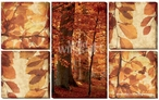 Autumn Leaves Wrapped Canvas Giclee Print Wall Art, Set of 5