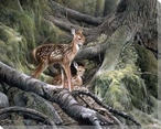 Awakening Young Deer Wrapped Canvas Giclee Print Wall Art