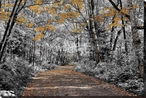 Awesome Autumn Wrapped Canvas Giclee Art Print Wall Art