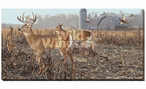 Back Forty Whitetail Deer Wrapped Canvas Giclee Print Wall Art