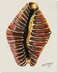 Beaded Cowne Shell Wrapped Canvas Giclee Print Wall Art