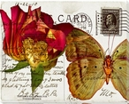 Bees Butterflies & Postcards III Wrapped Canvas Giclee Print