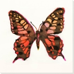 Big Monarch Butterfly Study Wrapped Canvas Giclee Print Wall Art